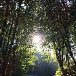 woodland walks in Devon