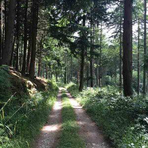 late summer walks in devon forests