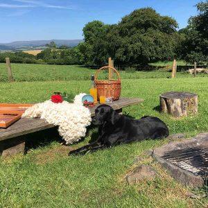 picnic on Dartmoor with Labrador