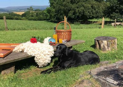 picnic on Dartmoor with Labrador