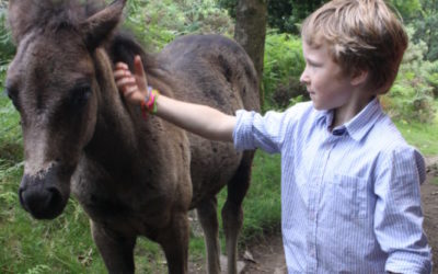 10 outdoor activities in Devon to entertain the children in the school holidays