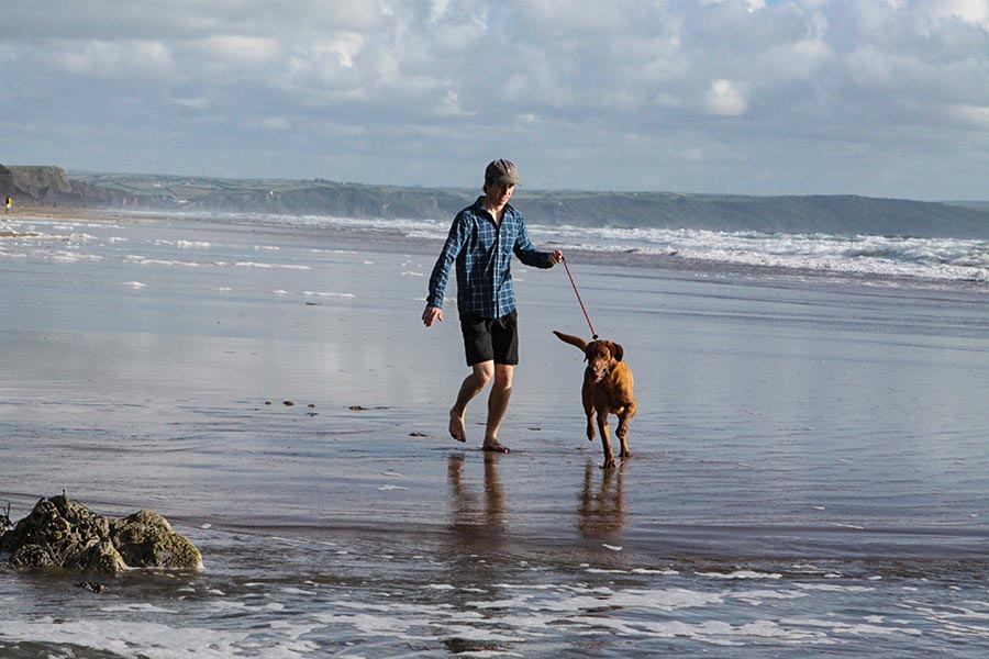 Dog on lead at dog-friendly beach in Devon
