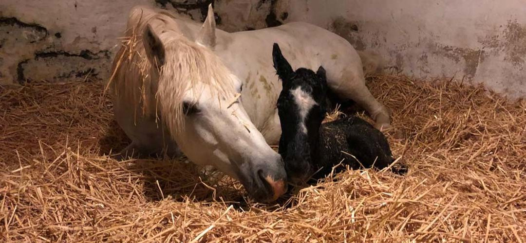 Tiffany's foal is born !