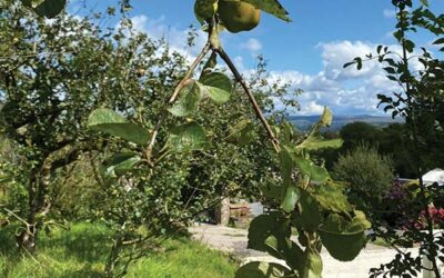 It's Apple Pressing Time…..
